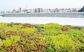 屋上等緑化工事